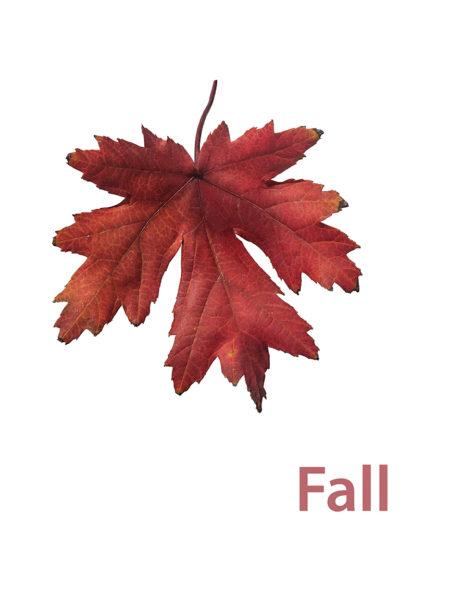 Leaf Fall Hit